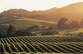 O Que Fazer em Napa Valley na Califórnia